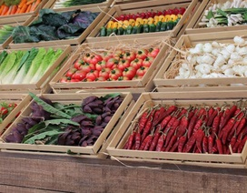 Các nhà khoa học đã tìm ra cách làm tăng ích lợi của rau quả