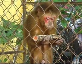 Tự nguyện giao nộp khỉ quý hiếm để thả về tự nhiên