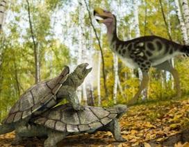 """Phát hiện dạng sống """"kỳ quái"""" của loài rùa đất cổ đại"""