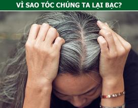 Bạc tóc vì căng thẳng, buồn phiền là hoàn toàn có thật