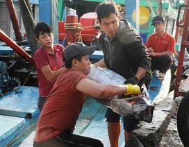 """Bình Định: Ngư dân """"đỏ mắt"""" tìm bạn thuyền vươn khơi"""