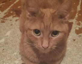 Căn hộ bốc mùi vì 130 con mèo chung sống với chủ nhân
