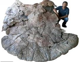 Con rùa lớn nhất mọi thời đại từng tồn tại từ 10 triệu năm trước