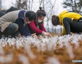 Người Trung Quốc quay trở lại việc đồng áng giữa tâm bão virus corona