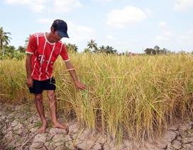 Hàng ngàn hộ dân ĐBSCL nguy cơ thiếu nước sinh hoạt