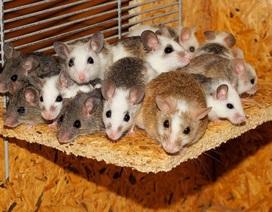 Mang chuột vào khách sạn để đòi bồi thường ở miễn phí