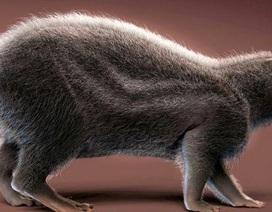 Hóa thạch của chuột tiền sử có kích thước bằng con người