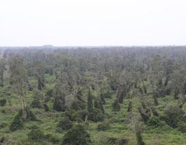 Hàng chục ngàn ha rừng ở Cà Mau có nguy cơ cháy vì khô hạn