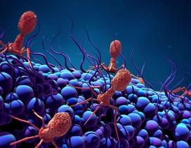 Các nhà khoa học phát hiện ra vi khuẩn ăn virus lớn nhất
