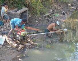 Thiếu nước ngọt, dân đánh liều bơm nước nhiễm mặn… cứu lúa