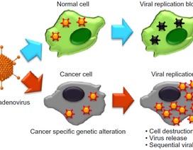 Các nhà khoa học dùng virus để tiêu diệt ung thư như thế nào?