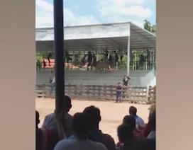 Bò chiến lao lên tận khán đài tấn công khán giả
