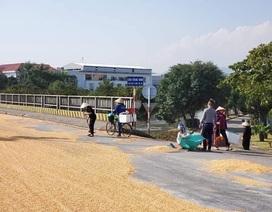 CSGT và người dân thu gom 5 tấn ngô rơi vãi khắp đường