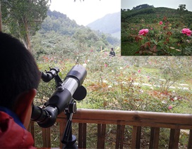 Chủ trại hồng tiếc nuối vì dịch corona ngăn khách đến ngắm mùa hoa đẹp nhất