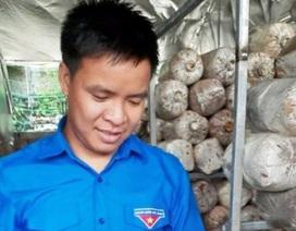 Nghệ An: Mô hình trồng nấm mang lại hiệu quả kinh tế của chàng kỹ sư trẻ