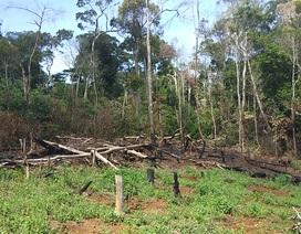 Hàng loạt cán bộ, lãnh đạo xã bị kiểm điểm vì để mất rừng