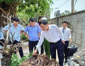 Vụ chặt cây trên đất đã mua suýt ngồi tù: Lại trả hồ sơ điều tra bổ sung!