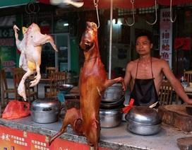 Thâm Quyến cấm ăn thịt chó mèo để chặn sự lây lan của corona virus