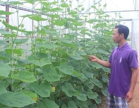 Thạc sĩ nông nghiệp bỏ việc về quê trồng rau sạch thu gần 1 tỷ đồng mỗi năm