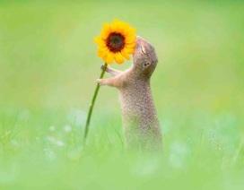 Khoảnh khắc hạnh phúc khi sóc ngửi thấy mùi hương hoa