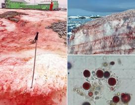 """Bí ẩn """"băng máu"""" xuất hiện ở Nam Cực"""