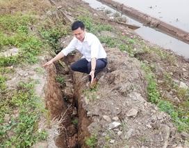"""Ninh Bình: """"Hà bá"""" đe dọa """"nuốt"""" trăm mét đê, dân nơm nớp lo sợ"""