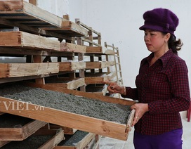 Do Covid-19, nghề nuôi tằm Lâm Đồng lao đao vì cạn trứng giống