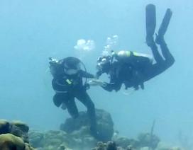 Màn cầu hôn dưới đáy biển Caribbean với chiếc nhẫn giấu trong vỏ sò
