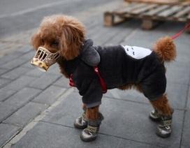 Hong Kong xác nhận trường hợp chó cưng nhiễm virus corona
