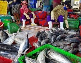 Khánh Hòa: Cá ngừ tấp nập về bờ, người lao động tất bật từ sáng đến trưa