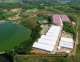 Lãnh đạo Sở TN-MT Phú Thọ khẳng định Dabaco bị phạt 300 triệu là đúng