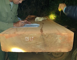"""Tiếp tục phát hiện đoàn lâm tặc """"lộng hành"""" vận chuyển gỗ trong đêm"""