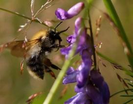Thuốc trừ sâu gây tổn hại cho não của ong như thế nào?