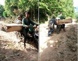 Tiếng thét đau đớn của rừng xanh Tây Nguyên: Lâm tặc, cán bộ cùng thoát tù