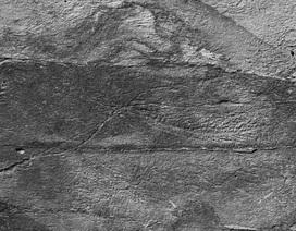 """""""Mạng xã hội"""" 500 triệu năm tuổi giúp quái vật biển kì lạ tự nhân bản"""