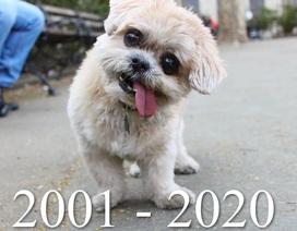 """Chú chó nổi nhất Instagram qua đời - 1,8 triệu người hâm mộ """"nát con tim"""""""