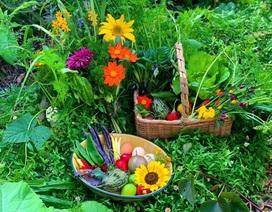 Khu vườn thơ mộng đầy đủ hoa trái, đẹp như cổ tích của cô gái người Úc