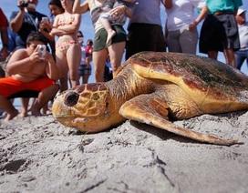Tại sao nhựa là một điểm thu hút chết người đối với rùa biển?