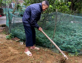 Cụ ông 107 tuổi ngày ngày cuốc đất trồng rau, viết chữ làm thơ