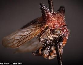 """Phát hiện loại bọ nhìn như """"quái vật"""" ở Nicaragua"""