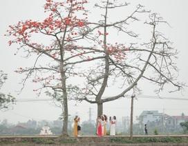 """Hoa gạo """"nhuộm đỏ"""" những góc trời ở ngoại thành Hà Nội"""