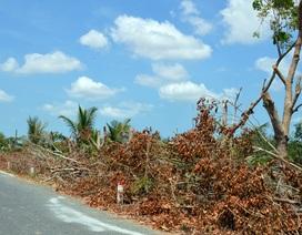 Cắt hàng loạt cây xanh để giảm… sụt lún giữa mùa khô hạn