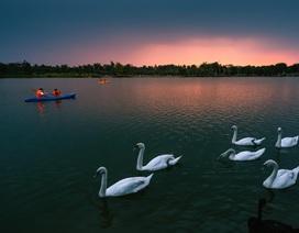 Ngắm hồ thiên nga dưới ánh hoàng hôn ngay phía Đông Hà Nội