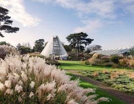 """Lạc bước vào """"khu vườn di sản"""" với hàng nghìn loại cây hoa độc lạ ở Anh"""