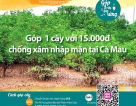 Làm rõ việc vận động tiền trồng rừng ở Vườn Quốc gia Mũi Cà Mau