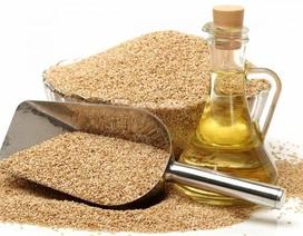 Thêm một công dụng mới của dầu mè đối với bệnh ung thư được phát hiện