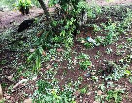 Mưa đá kèm giông lốc gây thiệt hại nhà cửa, hoa màu
