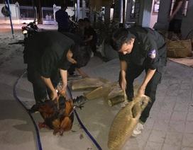 Bắt 5 đối tượng ngang nhiên vào nhà dân bắt người rồi tra tấn