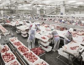 50.000 tấn thịt lợn đổ về, dân Việt được ăn lợn giá rẻ