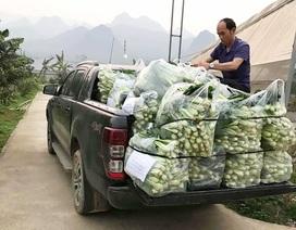 """Chủ vườn ở Lai Châu """"hái"""" 2 tấn rau ủng hộ người cách ly ở Hà Nội"""
